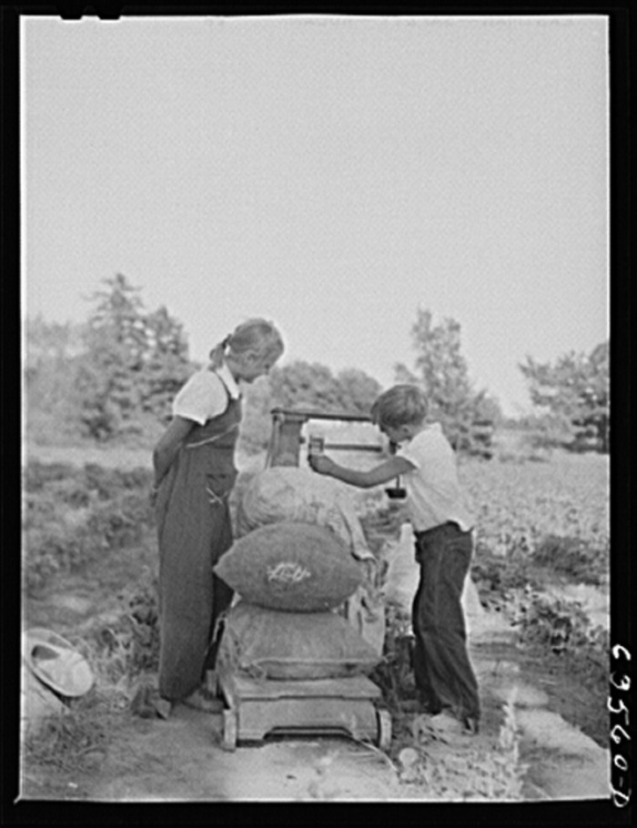 10. These youngsters are busy weighing beans in 1941 in Shawano.