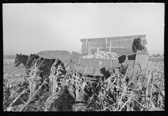 3. A man handpicks corn in Mercer County in 1936.