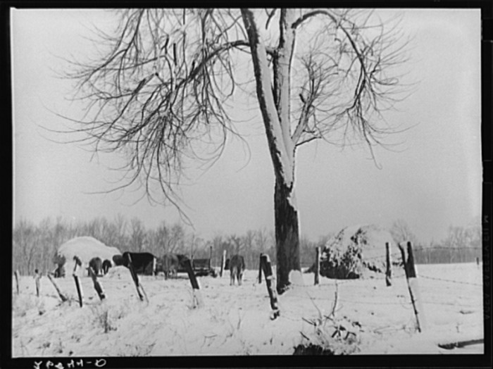 7. This is a charming winter farm scene from 1939 in Williamson County.