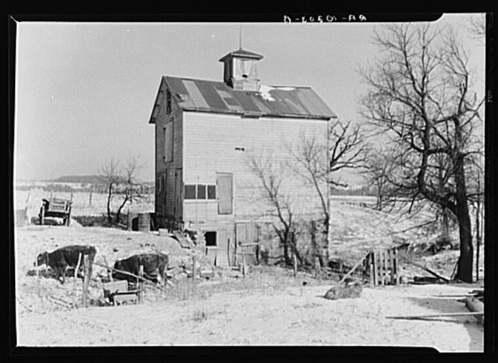 8. This is a shot of a barnyard in La Salle County in 1937.
