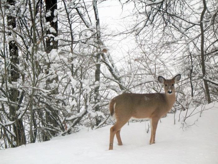3. It is easier to see wildlife, and don't they look cute frolicking in the snow?