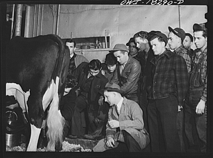 7. Students in the dairy husbandry class watch a demonstration of a milking machine.