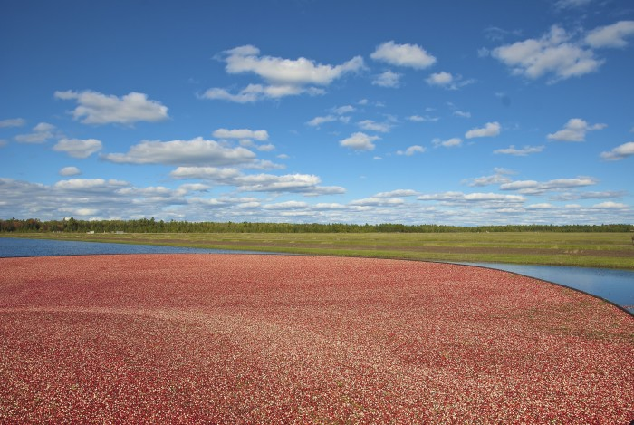13. See where cranberries come from.
