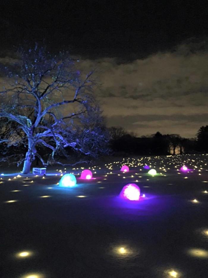 9. The Morton Arboretum