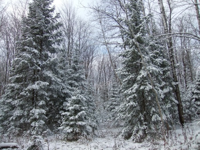 8. Chequamegon-Nicolet National Forest