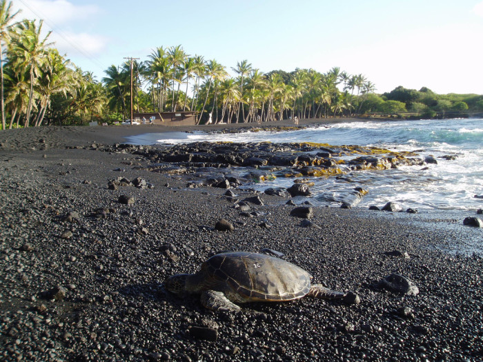Black Sand Beach Big Island Hi