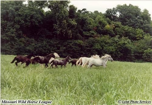 1.Wild Horses, Eminence