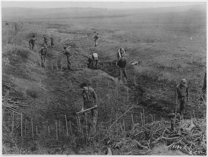 10.CCC workers planting willow sprouts.