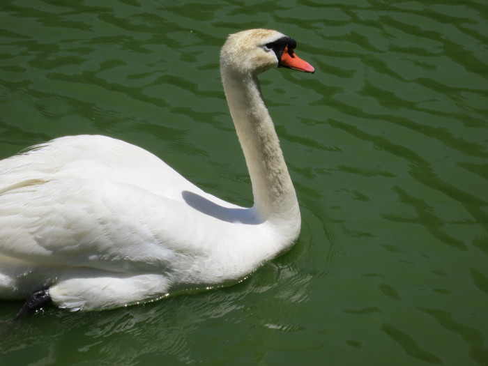 10.	Could this be The Swan Princess?