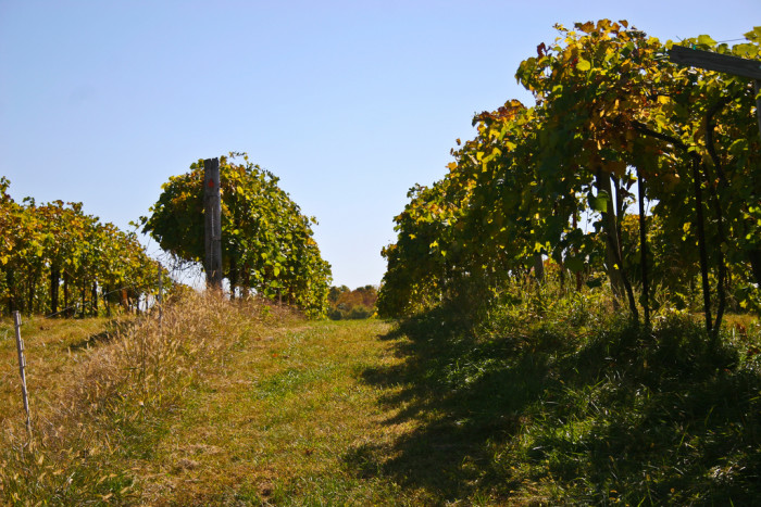 10.Missouri Wine Country is actually starting to get worldwide notice from wine connoisseurs.