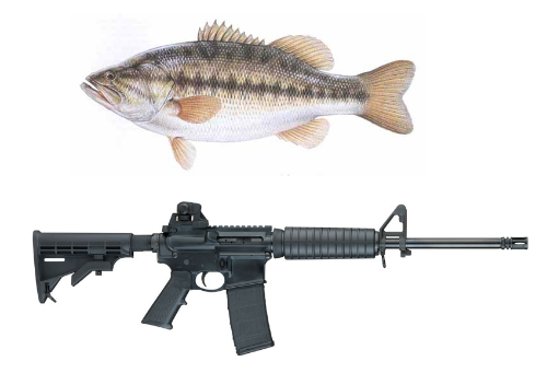 5. Using a firearm to fish is illegal.