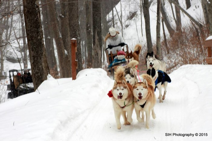 Learn how to dogsled.