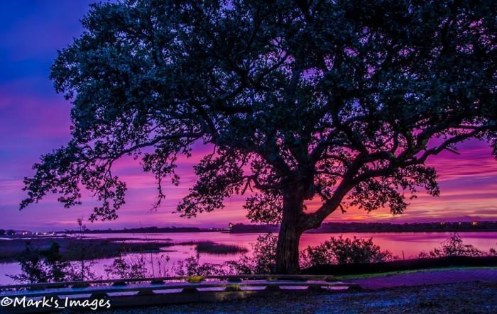 4. Purple morning.