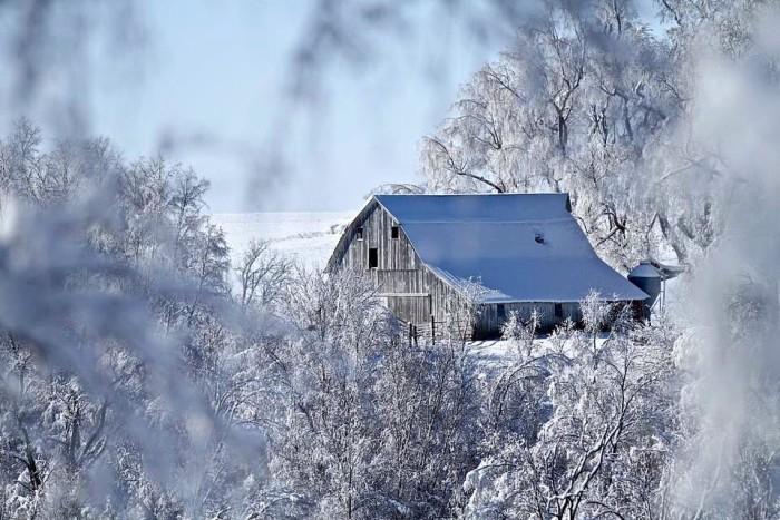 11.  Tammy McCormack Brice shot this beautiful photo of a snowy barn near Pella.