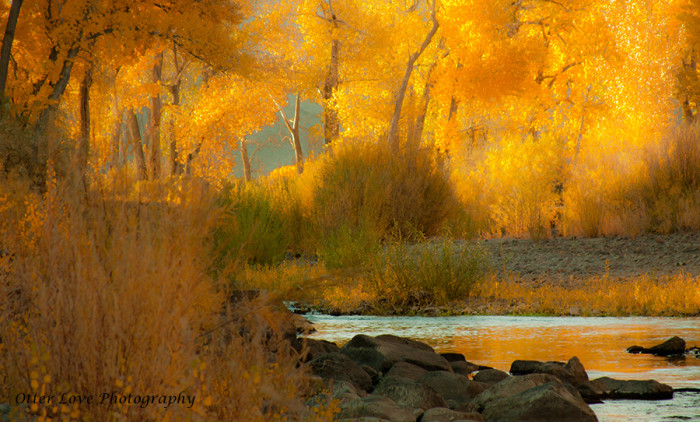 15. The Carson River on a lovely autumn day.