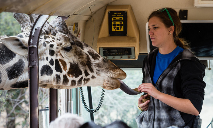 1. Camp Verde - Out of Africa Wildlife Park