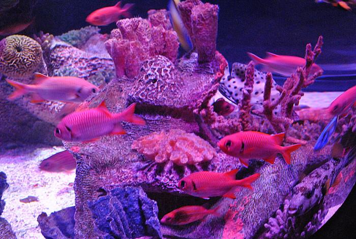 2. Visit an aquarium