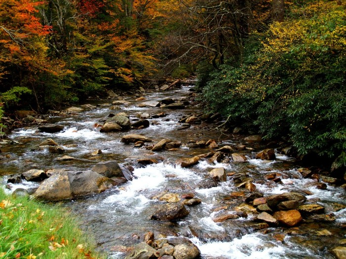 11) A creekside view in the Great Smoky Mountains