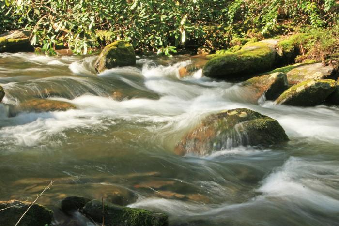 11) Townsend Streams