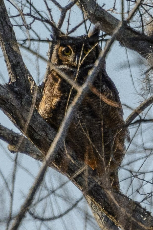 Thousands of birds populate the area, migrating through the seasons—but spotting an owl is a truly precious treat!