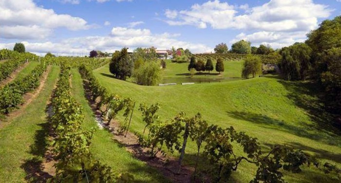 V is for vineyards (and wineries.)