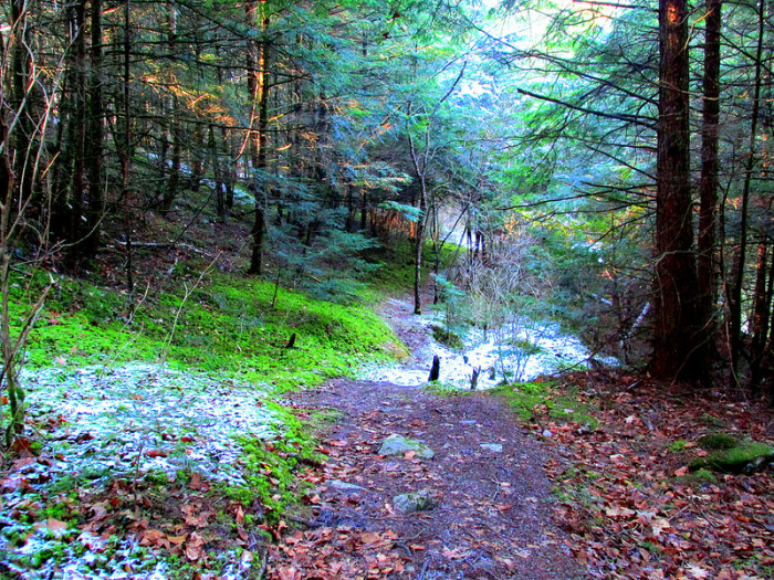 15.  Snow and moss create an enchanted path.