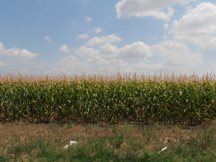 """1. """"Okay, there actually are a ton of cornfields in Iowa..."""""""