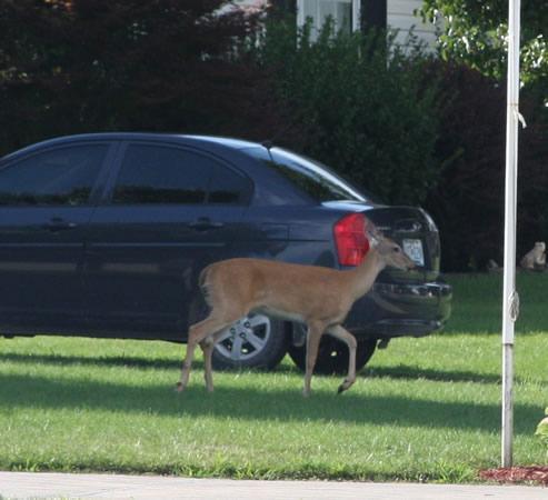 10....and deer.