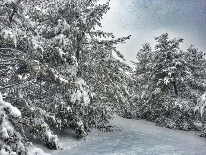 9. A winter wonderland in Freehold.