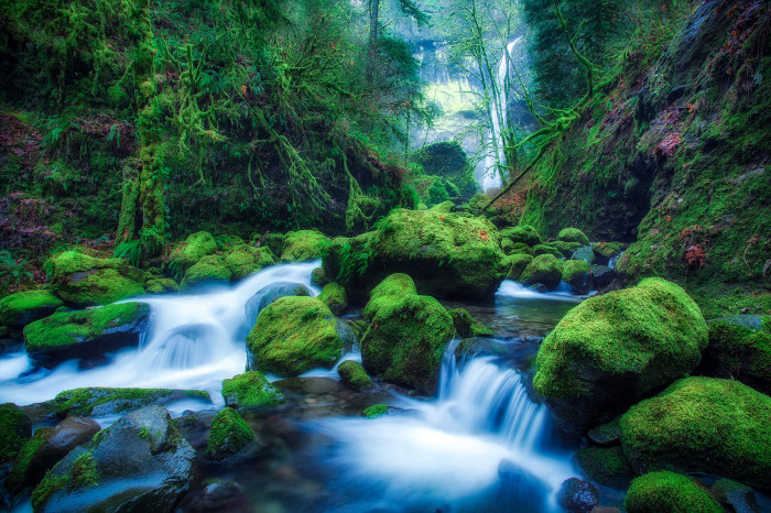 7. Oregon has beautiful forests....
