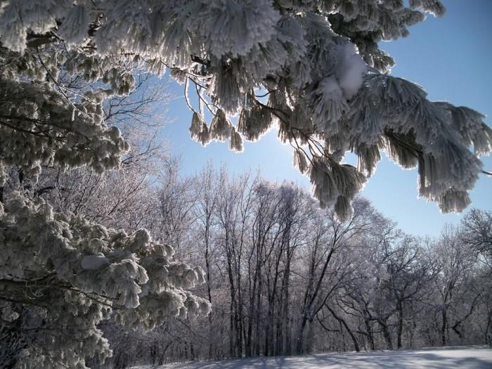 6. Robbi Stevens took this perfect photo of a winter wonderland in Iowa.