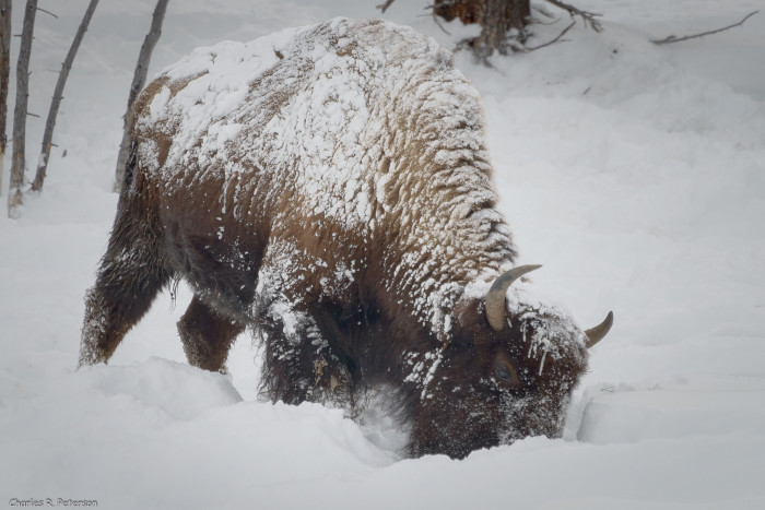 10. Observing wildlife in a snowy environment.