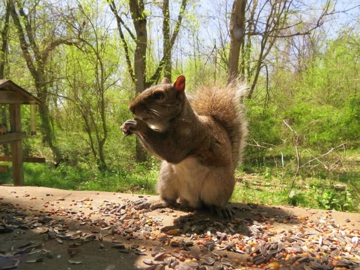 12XCliftySquirrel