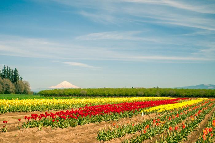 5. Bucolic farmland....