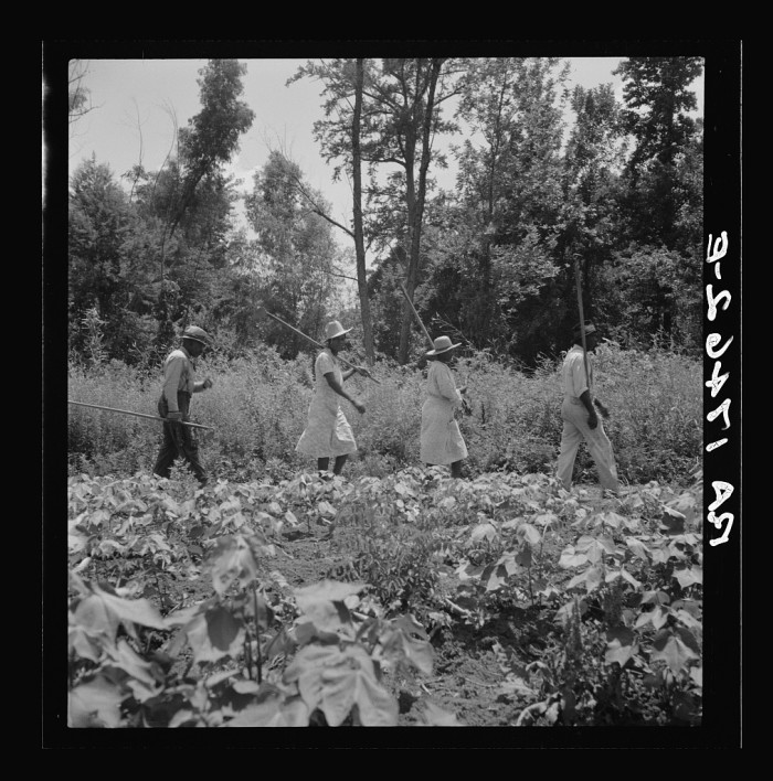 14. Working from 6:00 am until 7:00 pm, these Clarksdale cotton hoers were paid $1 for a day's labor.