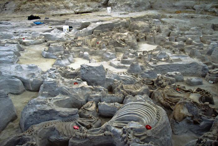 9. Ashfall Fossil Beds, near Royal
