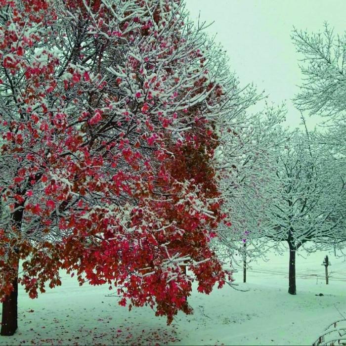 3. Victor Hugo Arreedondo Cisneros captured this stunning winter photo in Dennison.