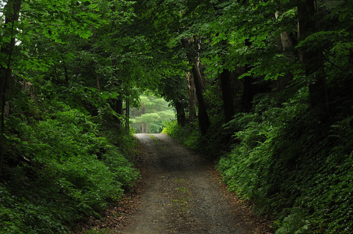 21.  Is this the way to a secret garden?