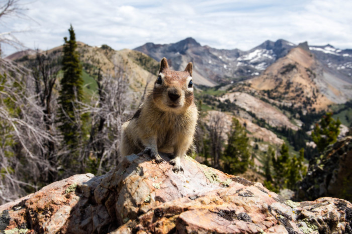 11, Another Idaho chipmunk because this little guy obviously wants the attention.