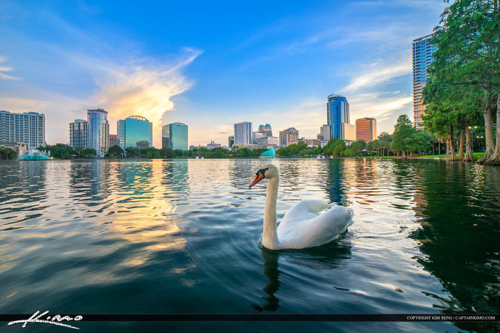 11. Or how about this swan chilling in Lake Eola Park in front of the Orlando skyline?