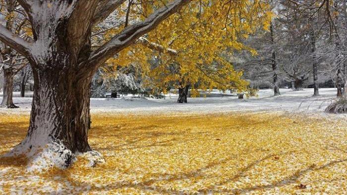 1. Ken Allaman took this amazing photo at Crapo Park in Burlington.