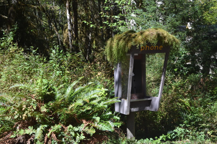 3. Moss-covered phone, Hoh Rainforest