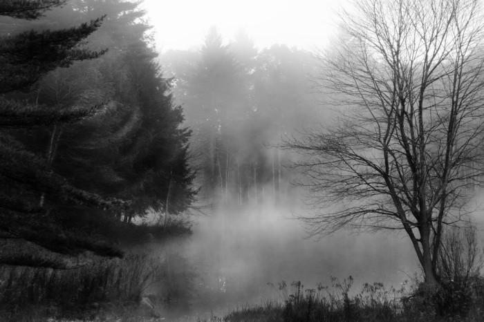 10. A dense fog creeps through the woods of North Spencer.