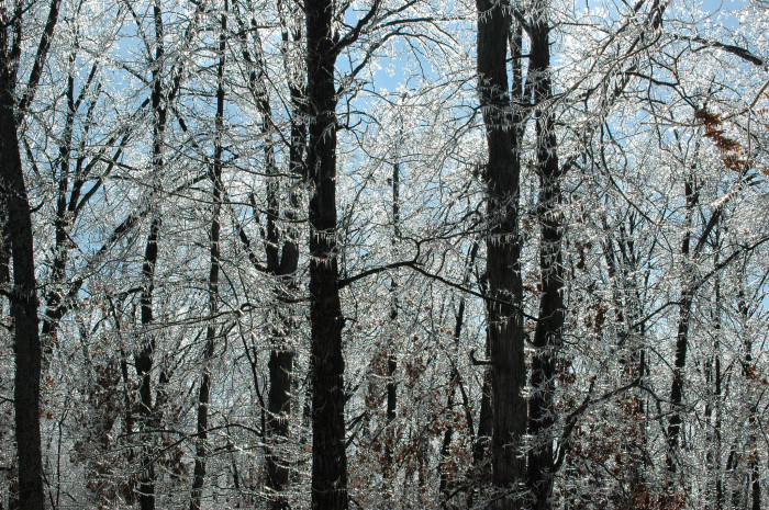 16) Magnificent Ice Covered Trees