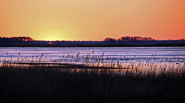 6) A serene sunrise on the marshes of Blackwater National Wildlife Refuge.