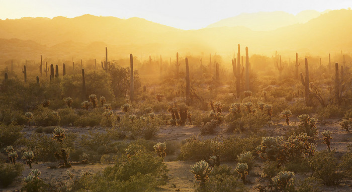 """1. Upon first learning about and exploring one of Arizona's deserts: """"Wait, this is a desert?"""""""
