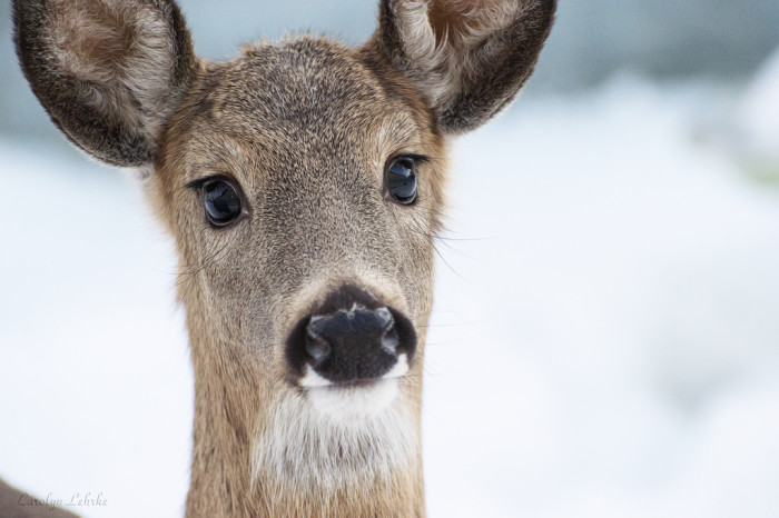 """7. This one brings new meaning to the phrase """"doe-eyed."""""""