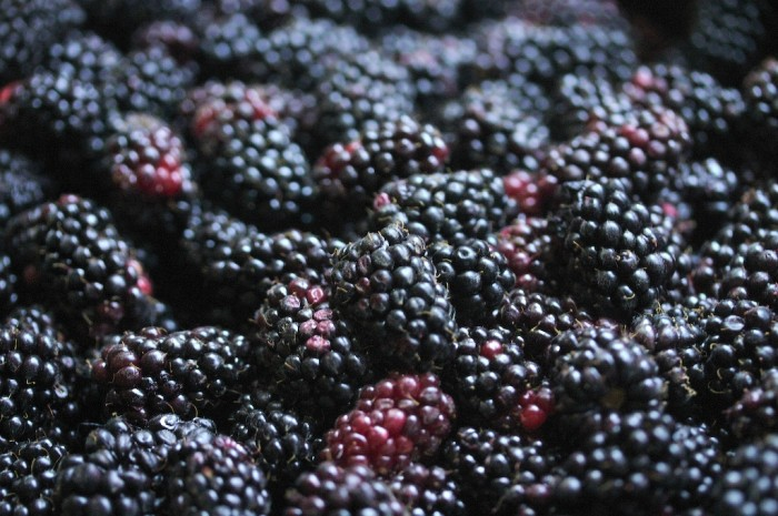 16. There would be no such thing as marionberries (or marionberry pie).... and that would be a tragedy.