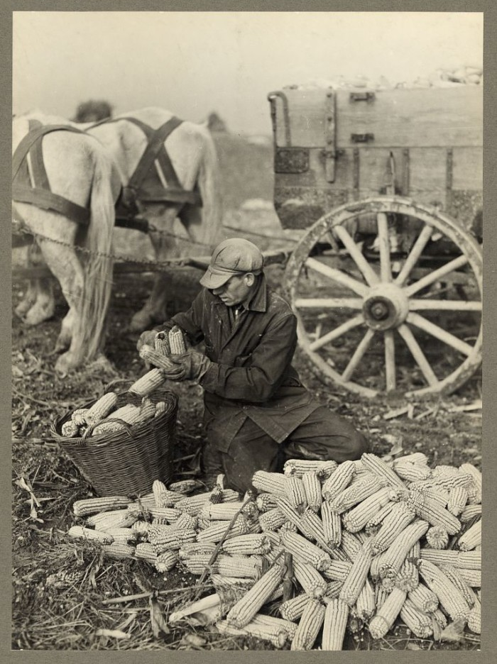 10) This sepia tone image of a man husking corn was taken in Washington County.