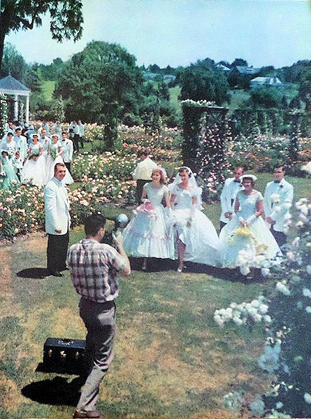 14. How beautiful! A wedding party takes photographs at the Rose Gardens in Allentown in 1955.